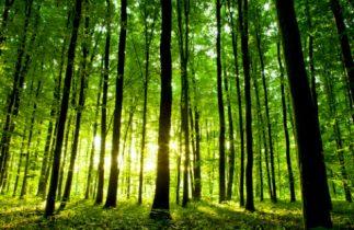 développement durable novelvy retraite