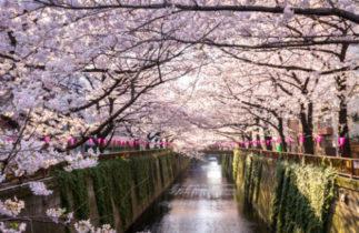 Novelvy Retraite au Japon